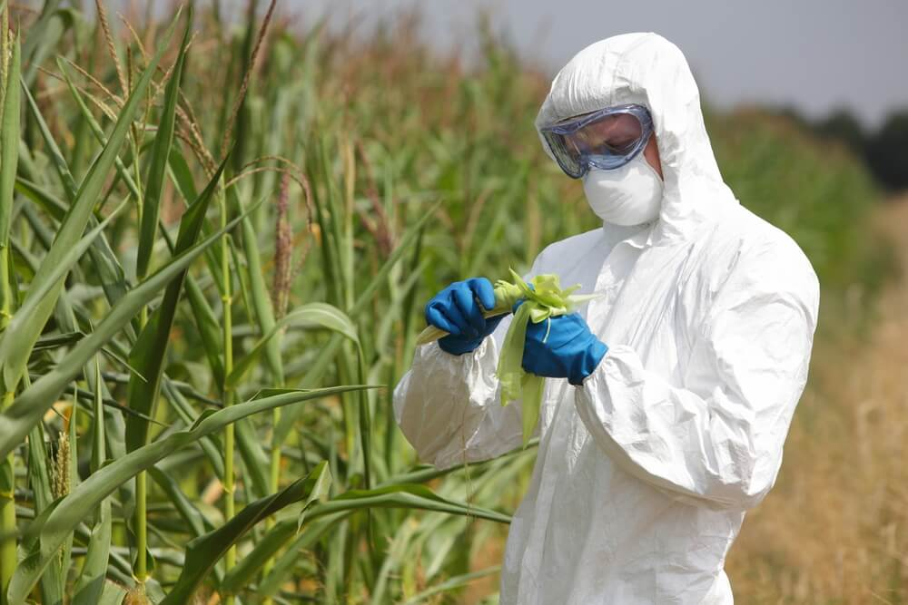 GMO Foods: Helpful or Harmful?