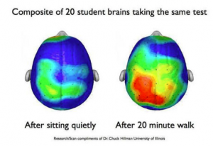 Exercise increases activity of learning centers!