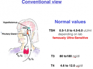 Conventional view of pituitary-thyroid feedback loop